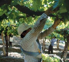 """Workshop: """"Balances, Desafíos y Perspectiva del comercio internacional. La vitivinicultura y las economías regionales en el marco de la globalización"""""""